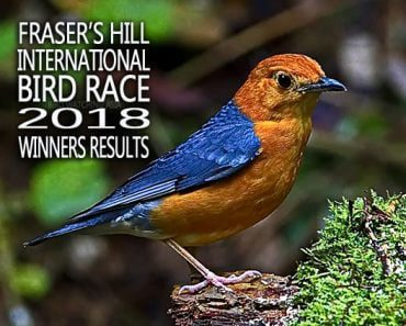 Results for Fraser's Hill International Bird Race 2018