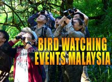 Bird Watching Events Malaysia